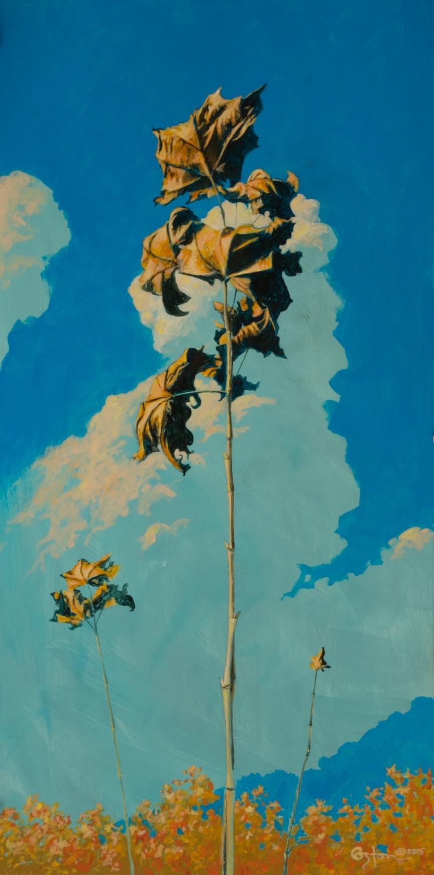Sycamore Sapling, Daniel Coston, 2015