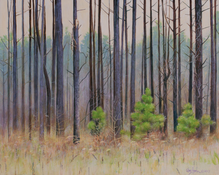 An acrylic painting by Daniel Coston of a group of pine trees alongside a south Arkansas highway.
