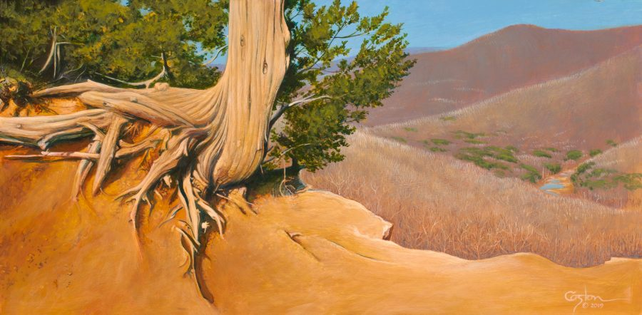 Acrylic painting of an old cedar tree, with its roots exposed, on the edge of Yellow Rock trail at Devil's Den State Park